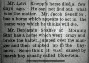 Senff Shaffer horses