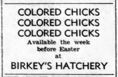 Birkey's hatchery colored chicks - Enquirer_Thu__Apr_1__1954_